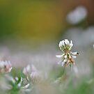 A miniature world by Heather Thorsen