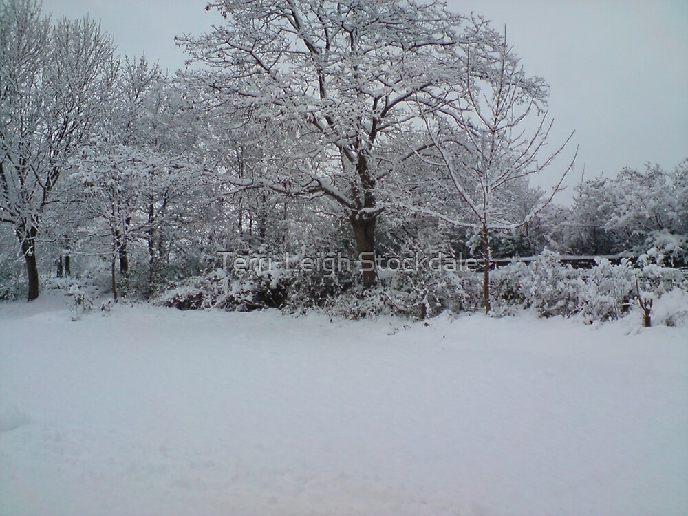 Snowy Scene by Terri-Leigh Stockdale