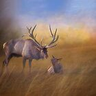 Benezette Elk by Kathy Weaver