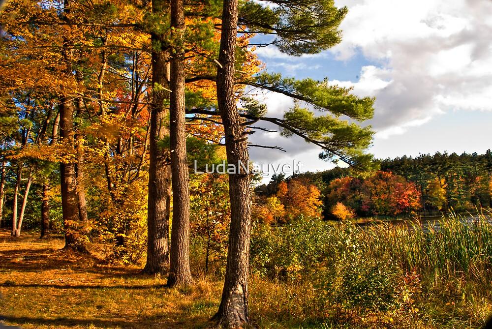 Fall in NH by LudaNayvelt