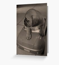 Check right, check left... pugalier puppy  Greeting Card