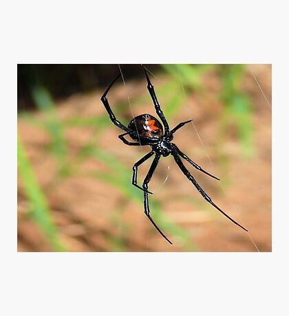 A  Widow     ( Black Widow Series ) Photographic Print