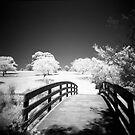 The bridge by Roberts Birze