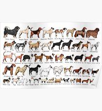Purebred Dog Breeds Poster