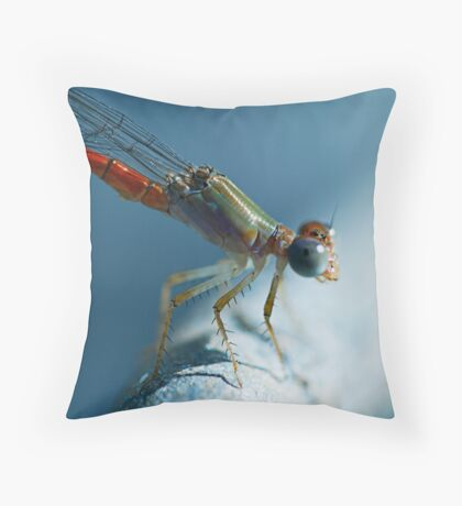 Odonata-Zygoptera Northern Territory Throw Pillow