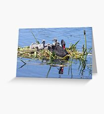 Black Swan & Cygnets resting Greeting Card