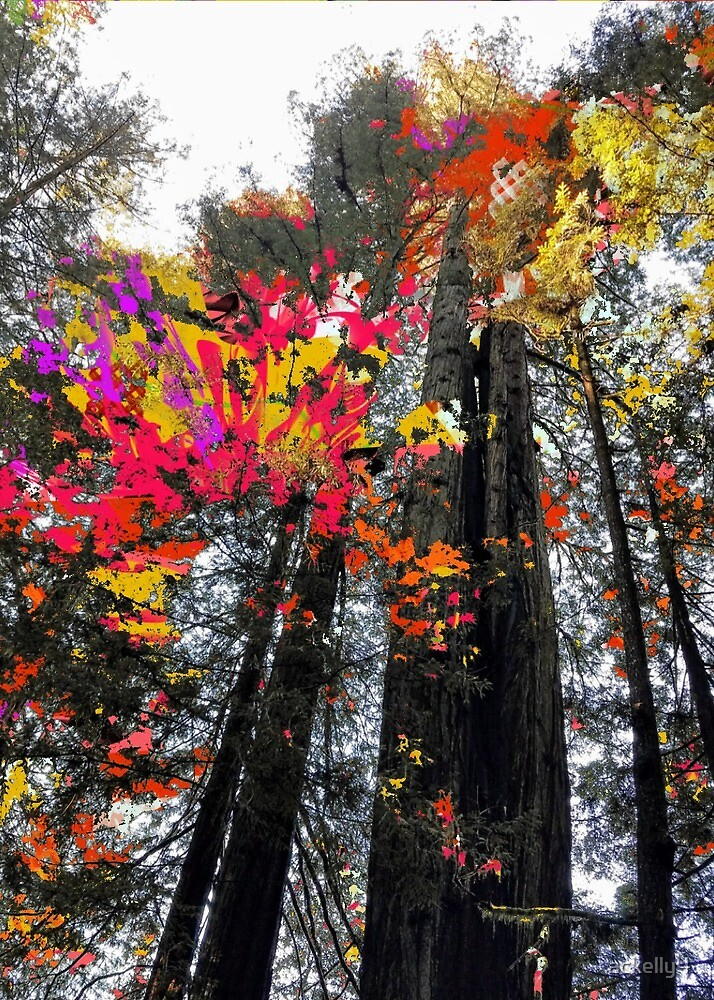 autumn trees by ackelly4
