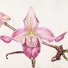 Ladyslipper Orchid by Nadine Thome