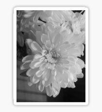 White Bloom (Balck And White) Sticker