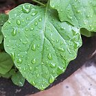 Raindrops on Leaves by elatepictures