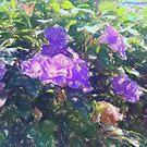 Violet draqing  by marcocreazioni