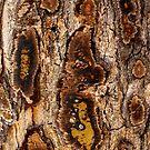 Treebark 3 by cuprum