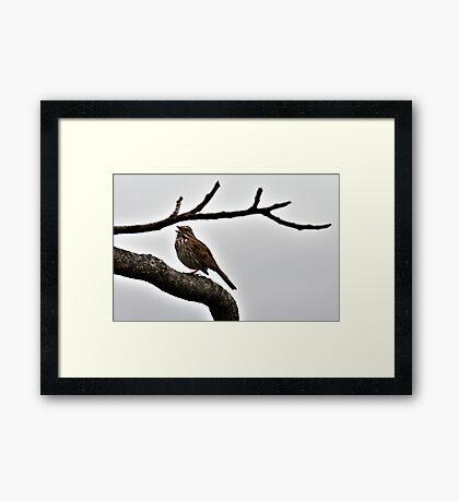 Singing Sparrow Framed Print