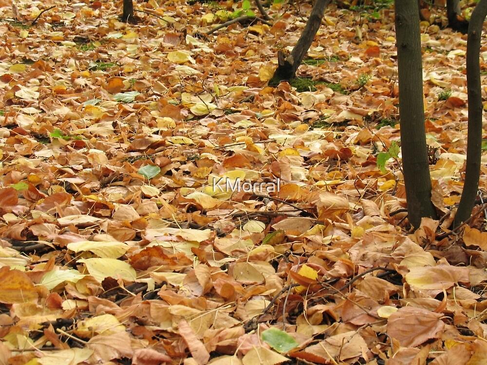 Golden carpet by KMorral