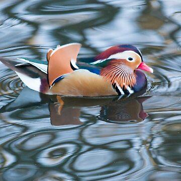 Mandarin Duck by LaHickmana