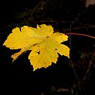 Single Golden Leaf by VisualFX
