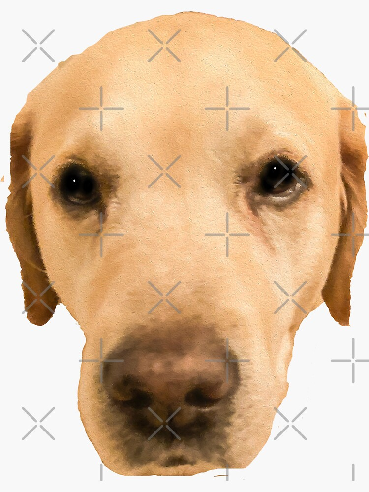 labrador face by kajsabl