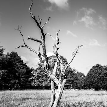 Lone Dead Tree by shaymurphy