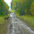 Deer on The Road...Better Run! by MaeBelle