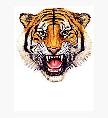 snarling tiger t-shirt design Photographic Print