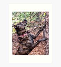 Squirrel Chasing Plott Hound Art Print