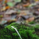Mushroom by Alice Oates