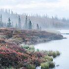 Misty Morning at Reflection Pond by Linda Sparks