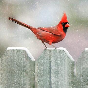 Cardinal Snowy Day  by bhymer