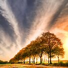 Trees by sandgrouse