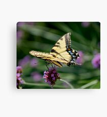 Butterfly on a Flower Canvas Print