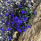 Love Purple by Mary Kaderabek-Aleckson