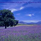 The Bridestowe Lavender Farm Tasmania, Australia by Debbie Steer