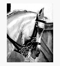 Lusitano Dressage Horse Portrait Photographic Print