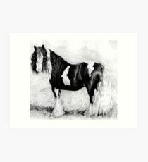 Gypsy Cob Horse Portrait Art Print