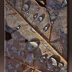 Dew Drops by Sheryl Gerhard