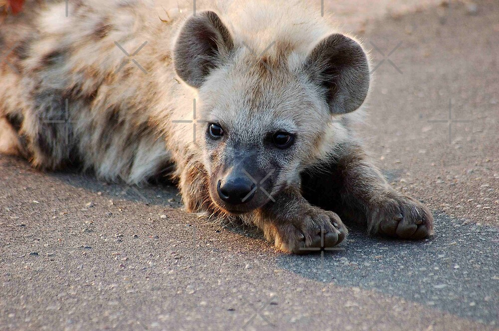THE HYENA 'PUP' - THE KRUGER NATIONAL PARK, South Africa by Magriet Meintjes