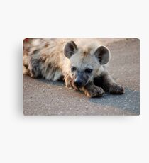 THE HYENA 'PUP' - THE KRUGER NATIONAL PARK, South Africa Canvas Print