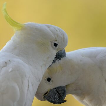Two Cockatoos by fotoWerner