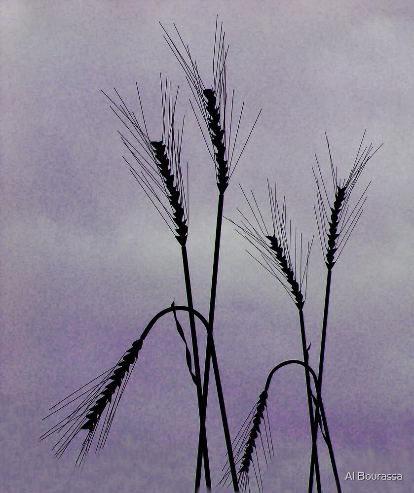 Tough Wheat by Al Bourassa