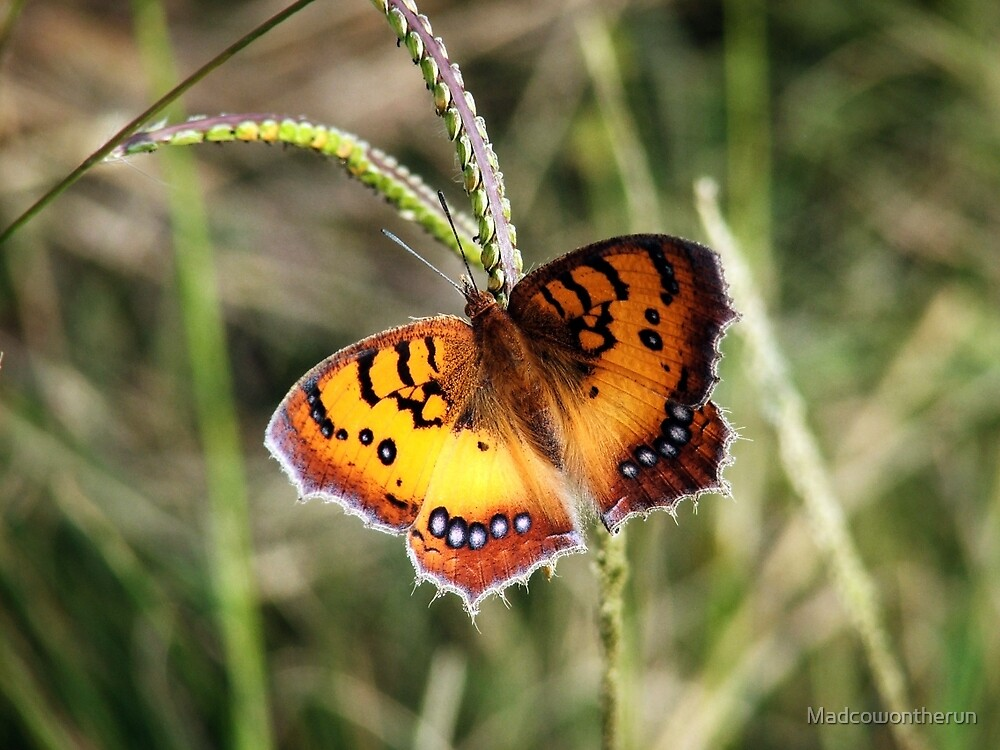 Resting Butterfly by Madcowontherun