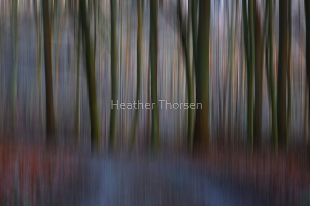 The woods by Heather Thorsen
