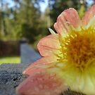 Flower Fence by ReveLinWonder