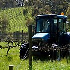 Slasher in the Vines - Adelaide Hills Wine Region- Fleurieu Peninsula. South Australia by MagpieSprings