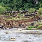 Wildebeest Into the River by Kay Brewer