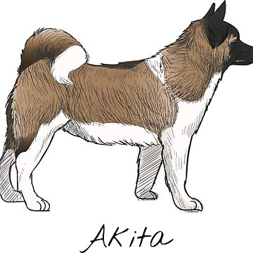 Akita Vintage Style Drawing by efomylod