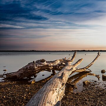 Dead tree, Gippsland Lakes by piersbuxton