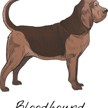 Bloodhound Vintage Style Drawing by efomylod