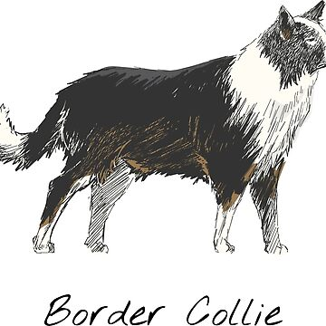 Border Collie Vintage Style Drawing by efomylod