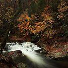 Laurel Creek Cascades by kathy s gillentine