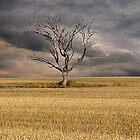 Golden Harvest, Woodchester, South Australia by Mark Richards